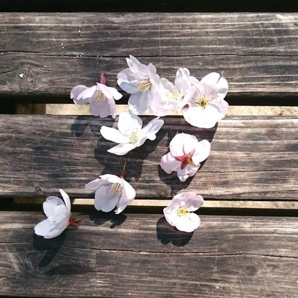 雀が摘んだお花