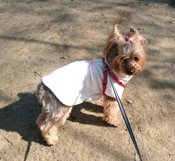 凜は桜色のコート