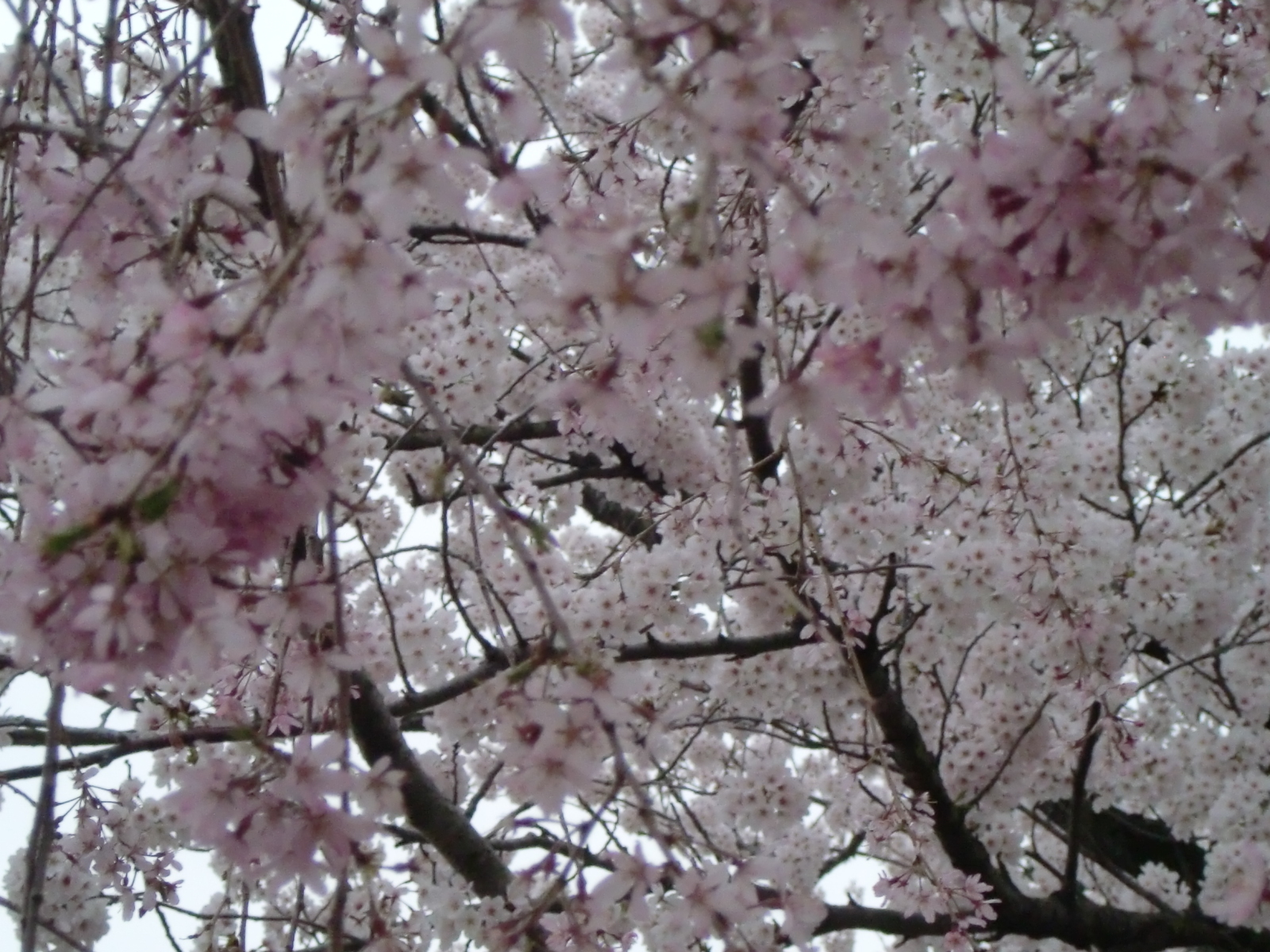 2011_0413_171540-CIMG6998.jpg