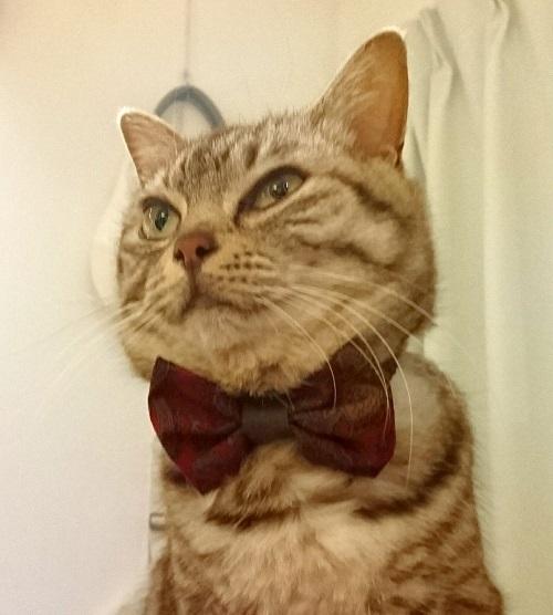 猫用リボンとオットちゃん