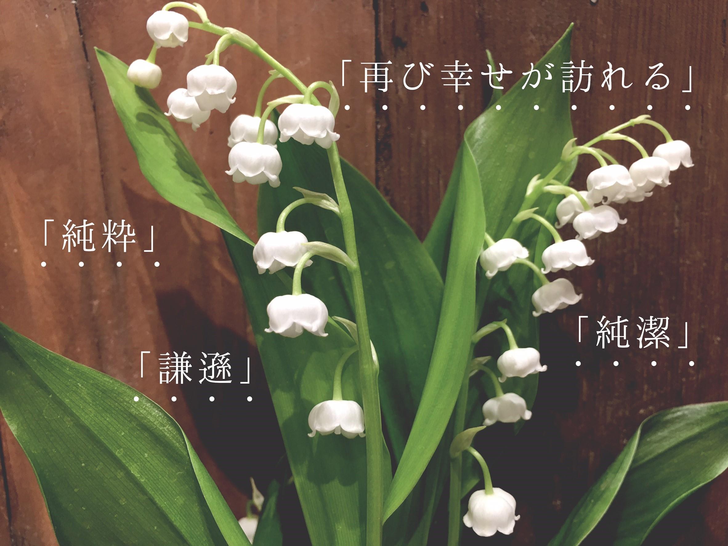 プチコノカビエラ塚口店_すずらんの日ブログ用_170427_0005