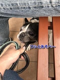 待ってる (4)