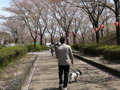 花見 (5)