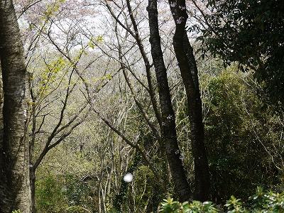 播磨中央公園 (1)