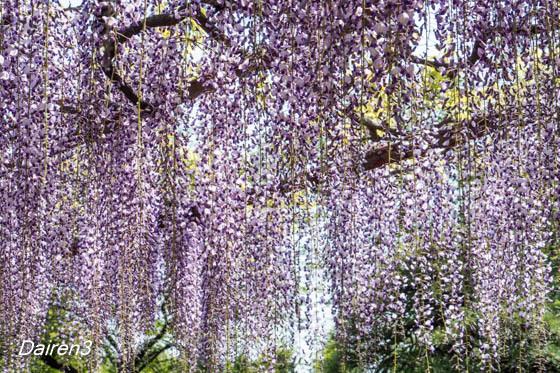 須賀の園フジ