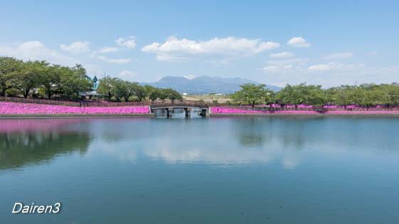 谷地沼親水公園の芝桜