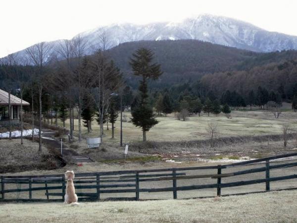 春山と里の桜25
