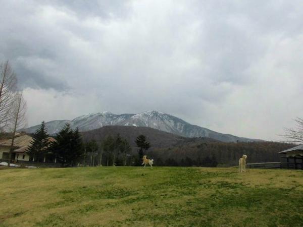 春山と里の桜26