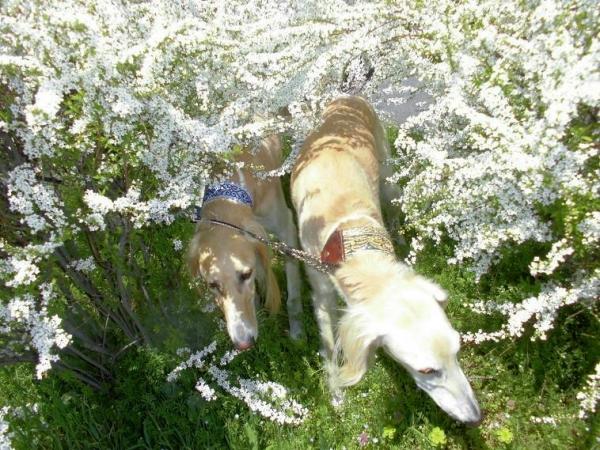 春山と里の桜29