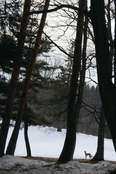 雪が溶けてゆく~14