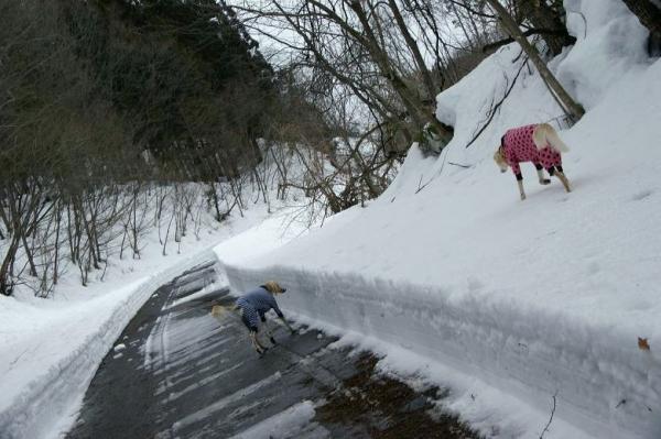 雪が溶けてゆく~16