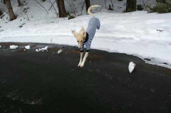 雪が溶けてゆく~17