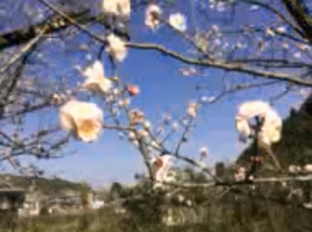 春を探しに08 花02