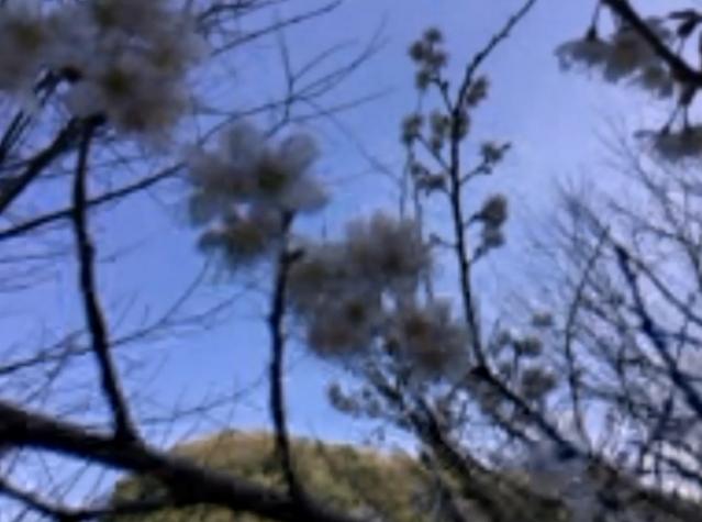春を探しに06 花01