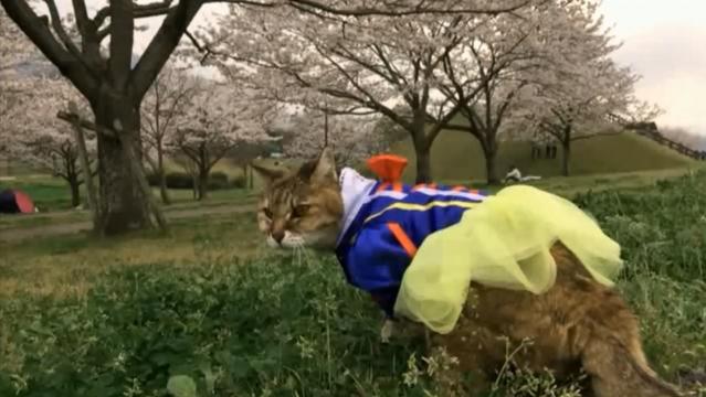 お花見配信-自然公園編-07 プラ雪姫01