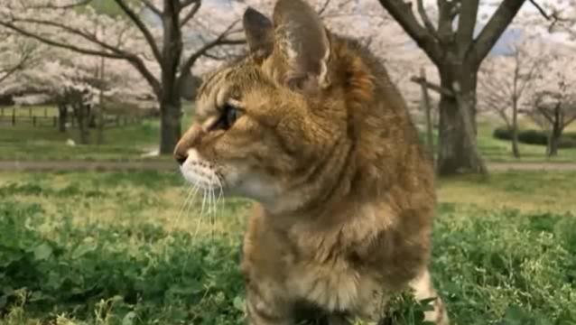 お花見配信-自然公園編-04 桜とプラン01