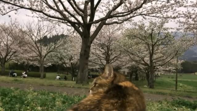 お花見配信-自然公園編-02 到着