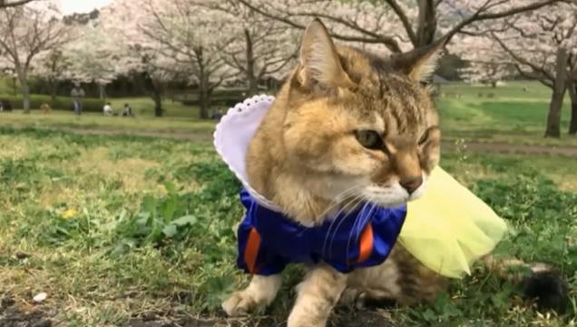 お花見配信-自然公園編-12 プラ雪姫04