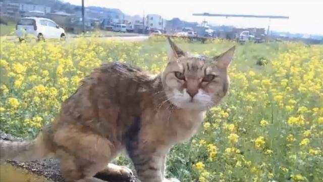 草刈り現場監督12 - 菜の花畑とプラン