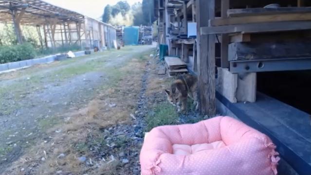 お外で留守番10 - 猫草遊びをするプラン