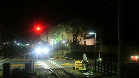 くぬぎ山駅ホームから桜並木