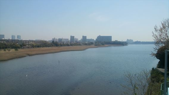 県道8号線からの谷津干潟