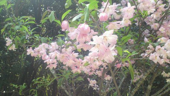谷津干潟公園の花