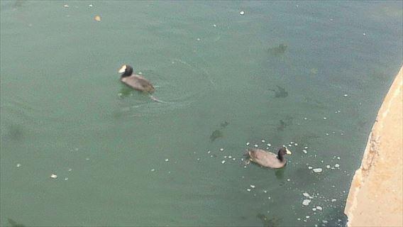谷津干潟の鳥2