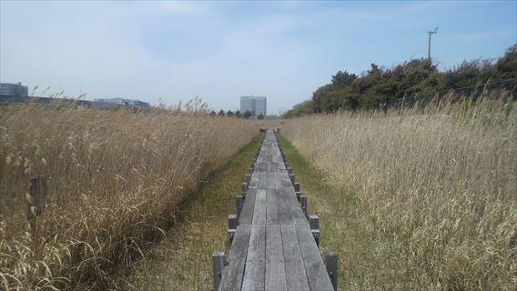 干潟観察ゾーンの木道