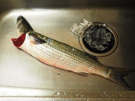 白身魚のカルパッチョ、食べる24