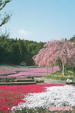 花の絨毯三田永沢寺170502