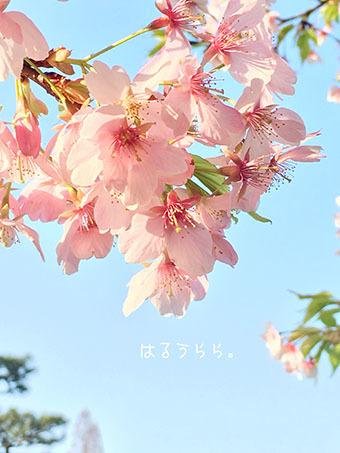 IMG_5491 (1)