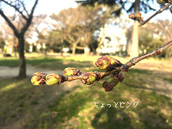 IMG_5645.jpg