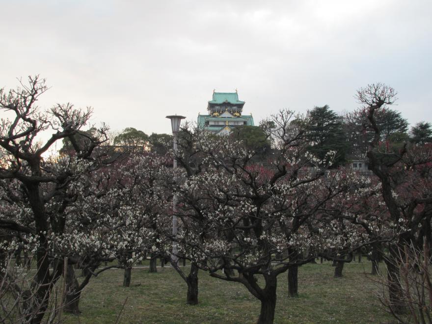 大阪城梅林1