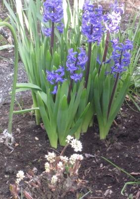 2017 春の庭