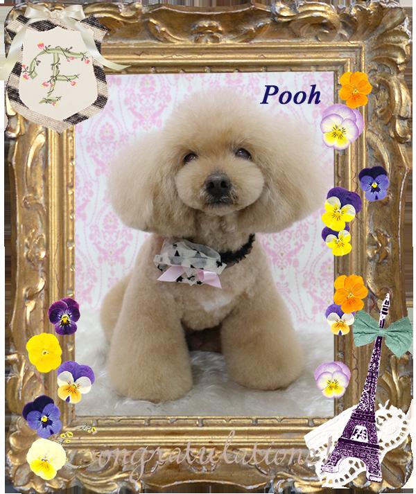 poohちゃん3-1