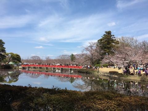 城址公園桜2017 4