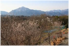 170325E 025花と武甲山32
