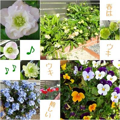 2017 4 お花がいっぱい
