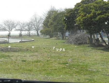 雪丸くなったツグミ 001