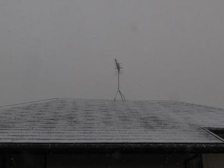 雪丸くなったツグミ 065