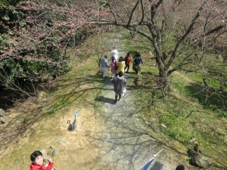 桜30日清水山 163