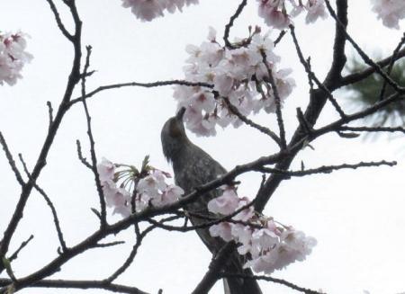 アトリ8日大川公園 013