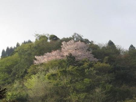 カラ迫山開き 010