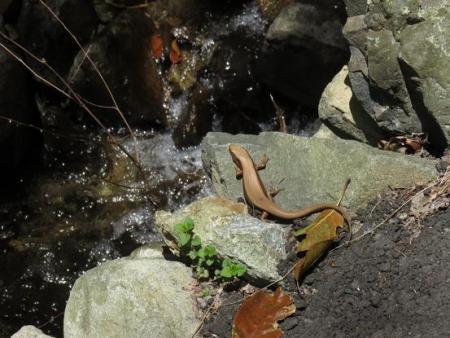 星野不動の滝 062