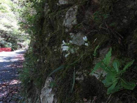 星野不動の滝 067