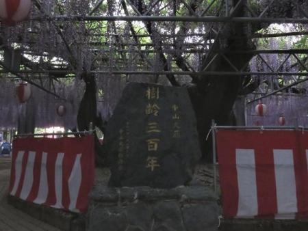 中山藤・清水白踊子 036