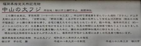 中山藤・清水白踊子 030