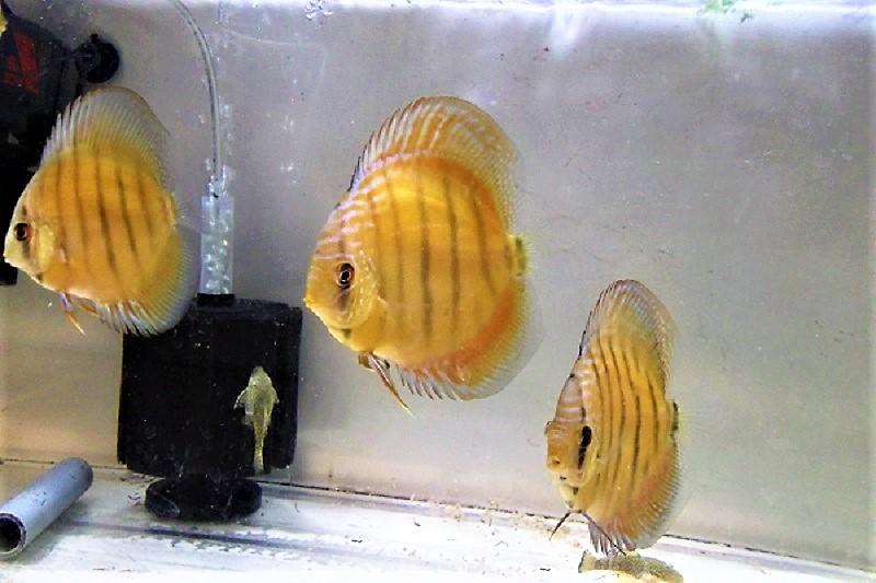 稚魚2 (2)
