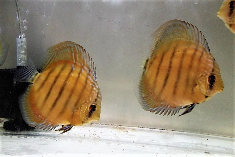 稚魚2 (1)